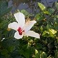 植物園31.jpg