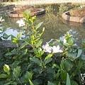 植物園33.jpg