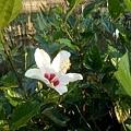植物園32.jpg