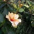 植物園34.jpg