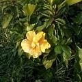植物園35.jpg