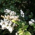 植物園46.jpg