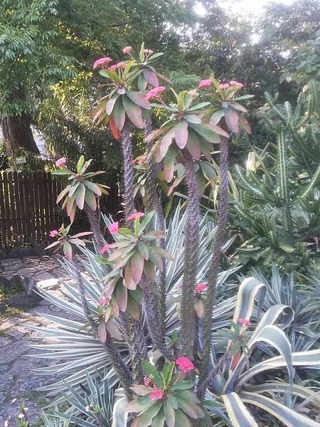 植物園48.jpg