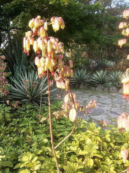 植物園47.jpg