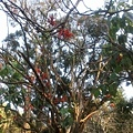 植物園56.jpg