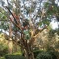 植物園57.jpg