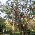 植物園58.jpg
