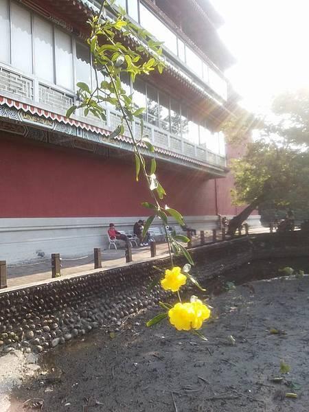 植物園61.jpg