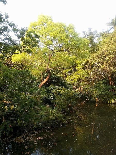 植物園67.jpg