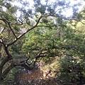植物園68.jpg