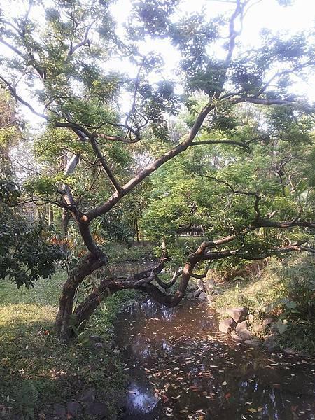 植物園69.jpg