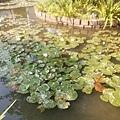 植物園71.jpg
