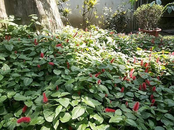 花卉6.jpg
