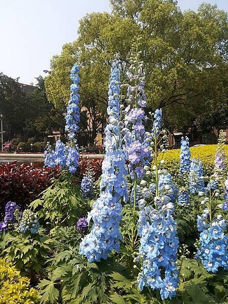 花卉9.jpg