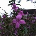 紫色小花3.jpg