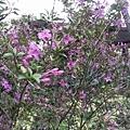 紫色小花4.jpg