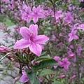紫色小花10.jpg