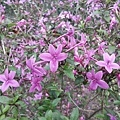 紫色小花8.jpg