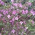 紫色小花14.jpg