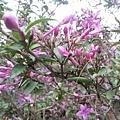 紫色小花15.jpg