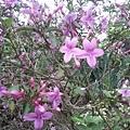 紫色小花16.jpg