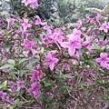 紫色小花17.jpg