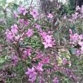 紫色小花18.jpg