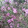 紫色小花19.jpg