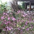 紫色小花21.jpg