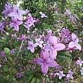 紫色小花25