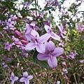 紫色小花28