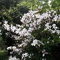 櫻花6.jpg