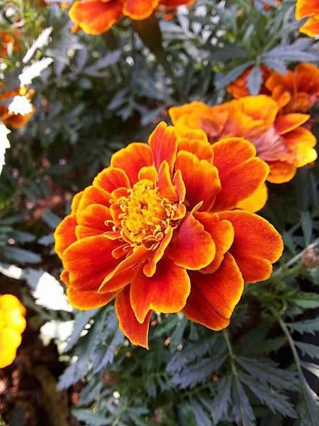 花卉1.jpg