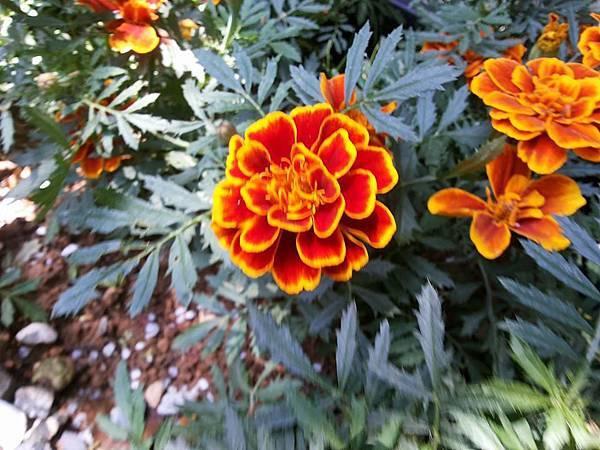 花卉3.jpg