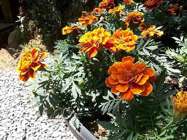 花卉5.jpg