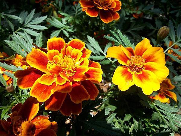 花卉10.jpg