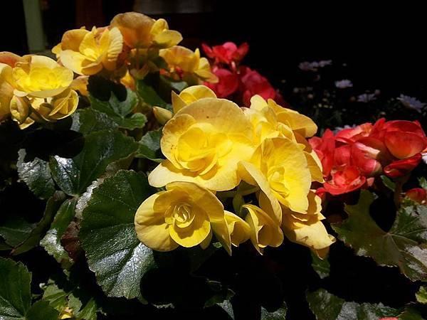 花卉14.jpg