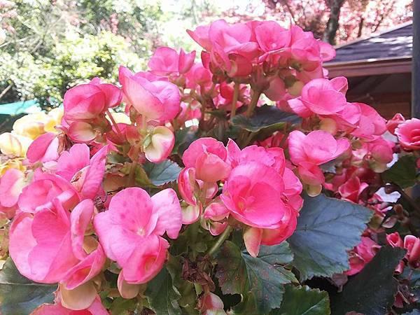 花卉15.jpg