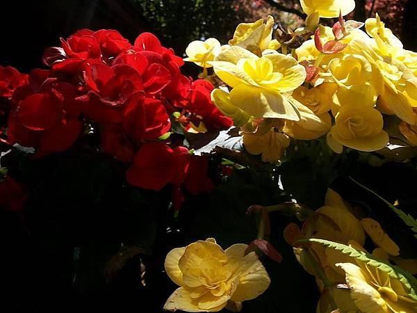 花卉16.jpg