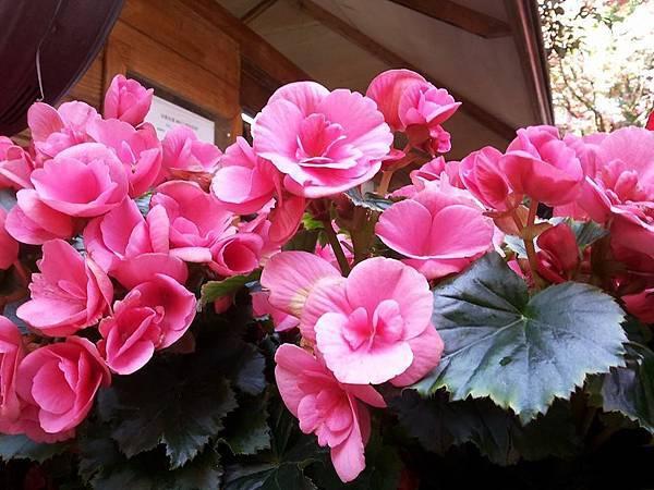花卉17.jpg