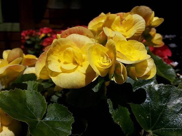花卉18.jpg