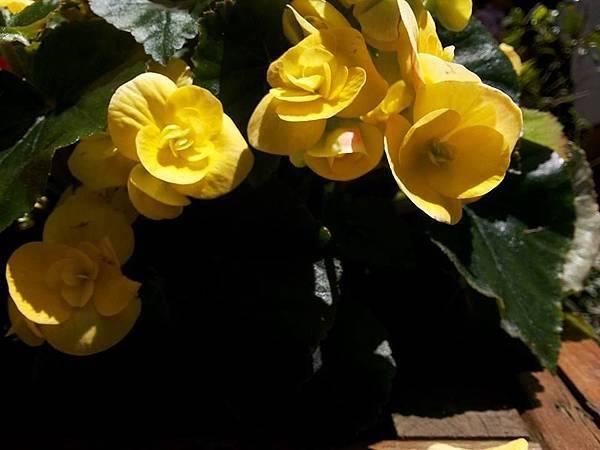 花卉19.jpg