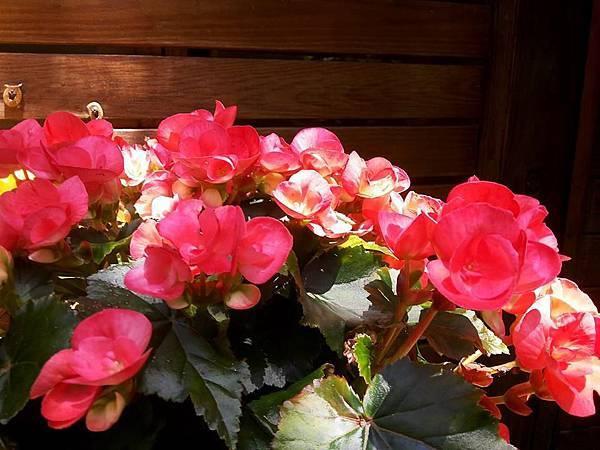 花卉20.jpg