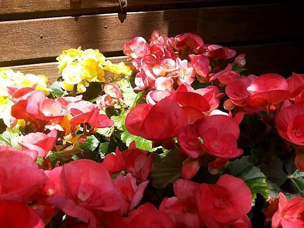花卉21.jpg