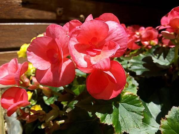 花卉22.jpg