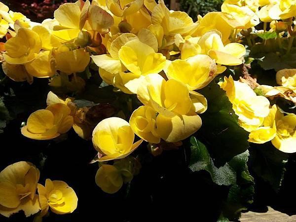 花卉23.jpg