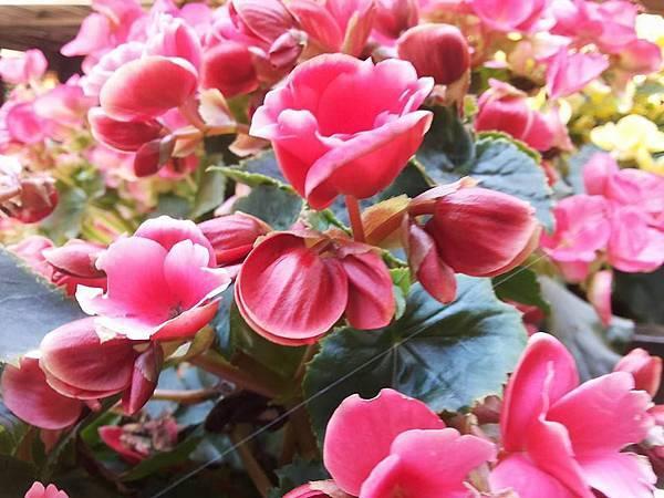 花卉24.jpg
