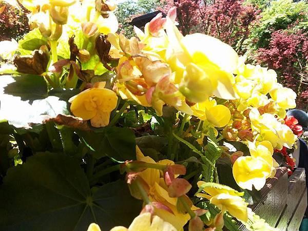 花卉25.jpg