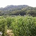 魯冰花17.jpg