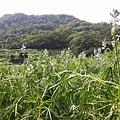 魯冰花28.jpg